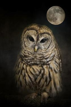 Barred Owl and the Moon by Jai Johnson