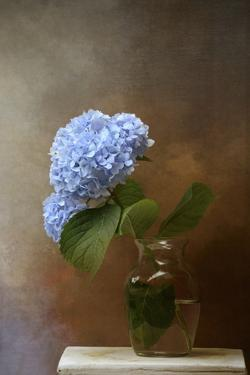 Blue Hydrangea in a Vase by Jai Johnson