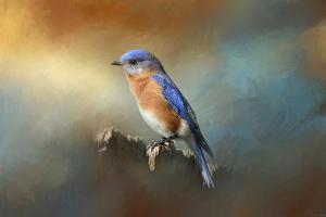 Bluebird on the Fence by Jai Johnson