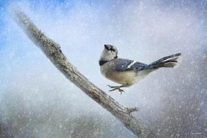 Bluejay in the Snow by Jai Johnson