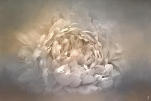 Blushing Silver and Gold Peony by Jai Johnson