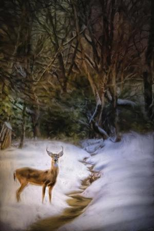 Buck at Snowy Creek by Jai Johnson