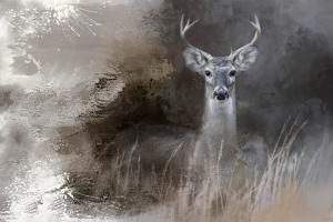 Buck in the Shadows by Jai Johnson