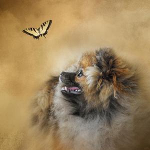 Butterfly Dreams Pomeranian by Jai Johnson