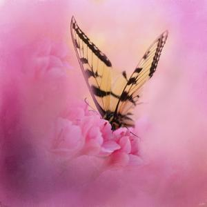 Butterfly on the Azaleas by Jai Johnson