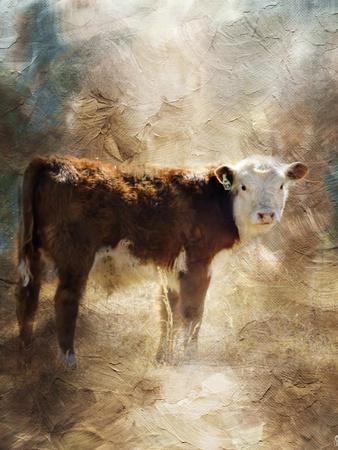 Calf in the Sunday Sun