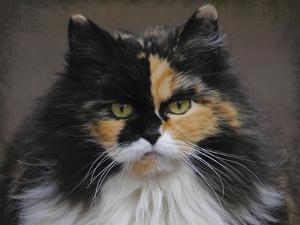 Calico Cat Portrait by Jai Johnson