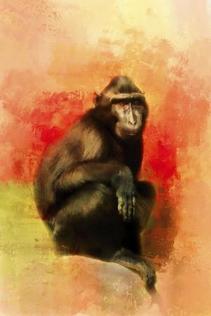 Colorful Expressions Black Monkey by Jai Johnson