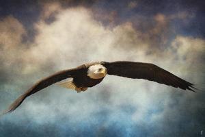 Coming Home Bald Eagle by Jai Johnson