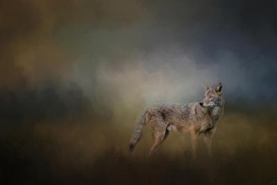 Coyote at Shiloh by Jai Johnson