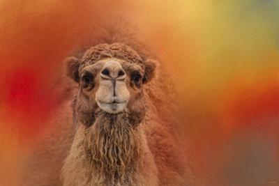 Dromedary Camel by Jai Johnson