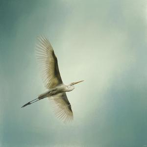 Egret Overhead by Jai Johnson