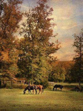 Grazing in Autumn by Jai Johnson