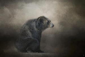 Grizzly at Rest by Jai Johnson