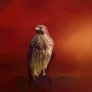 Hawk on a Hot Day by Jai Johnson