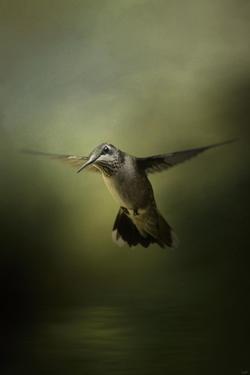 Hummingbird over Water by Jai Johnson