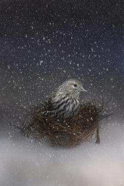 Keeping Warm in My Nest by Jai Johnson
