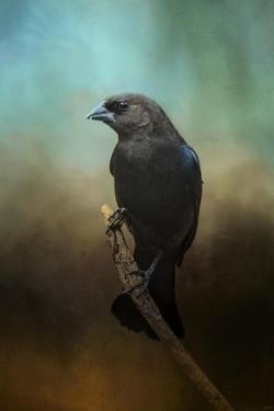 Lazy Bird by Jai Johnson