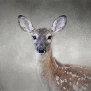 Little Miss Lashes White Tailed Fawn by Jai Johnson