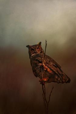 Owl in the Marsh by Jai Johnson