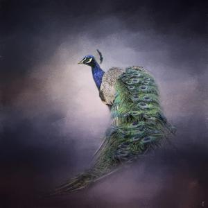 Peacock 11 by Jai Johnson