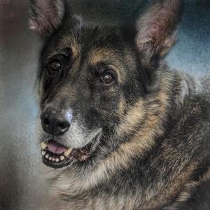 Portrait of a Shepherd by Jai Johnson