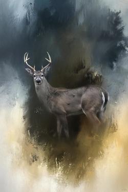 Shiloh Buck by Jai Johnson