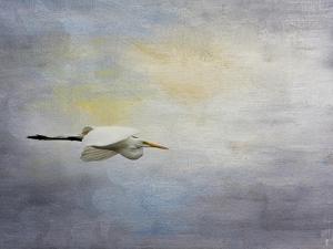 Silent Flight Great White Egret by Jai Johnson