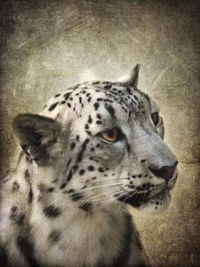 Snow Leopard Portrait by Jai Johnson