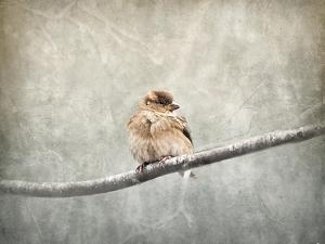 Sparrow Braving the Cold by Jai Johnson