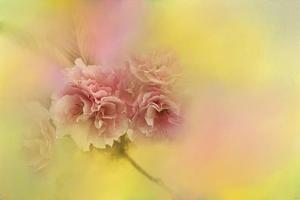 Spring Cherry Blossoms by Jai Johnson