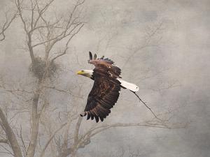 Starting over Bald Eagle by Jai Johnson