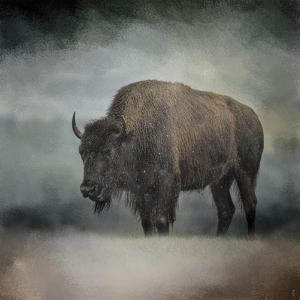 Stormy Day Buffalo by Jai Johnson