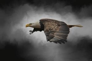 Stormy Sky Flight by Jai Johnson