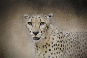 The Cheetah by Jai Johnson