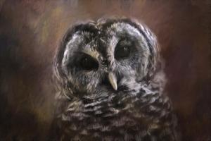 The Curious Owl by Jai Johnson