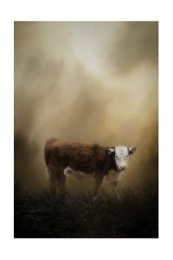 The Lone Calf by Jai Johnson