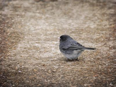 Tiny Junco in a Big World
