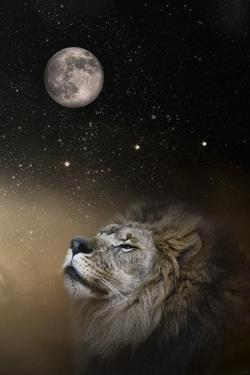Under the Moon and Stars by Jai Johnson