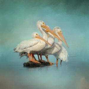 We are Family White Pelicans by Jai Johnson