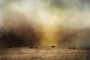 Where the Buffalo Roam by Jai Johnson
