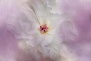 White Peony 4 by Jai Johnson