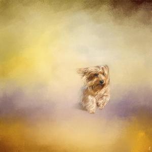 Yorkie Running into the Wind by Jai Johnson