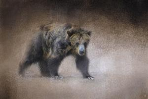 Young Grizzly Bear by Jai Johnson