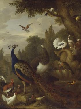 Peacock, Peahen, Parrots, Canary, and Other Birds in a Park, C.1708-10 by Jakob Bogdani