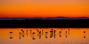 Beautiful Sunset Panorama with Flamingos Silhouettes, National Park Camargue, Provence, France by Jakub Gojda