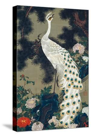 A Peacock, Pine and Peony by Jakuchu Ito