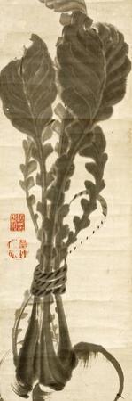 Turnips by Jakuchu Ito