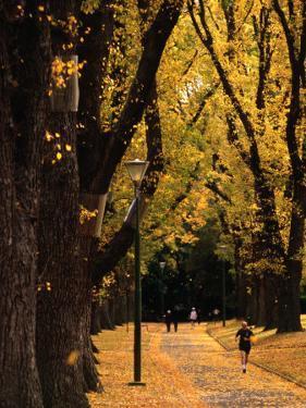 Fitzroy Gardens, Melbourne, Australia by James Braund