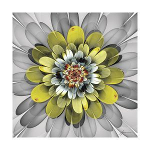 Fractal Blooms IV by James Burghardt